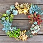 a wreath, succulent wreath, succulents
