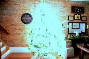 photograph christmas tree night