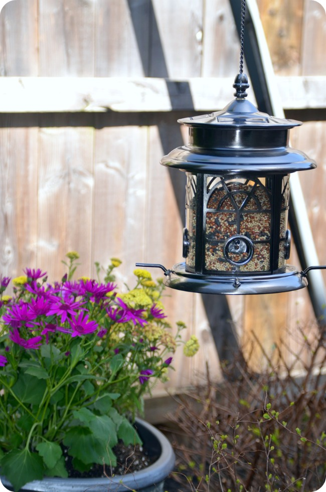 My Lowes Card >> Bird Feeder and Yard Before & After - Home Stories A to Z