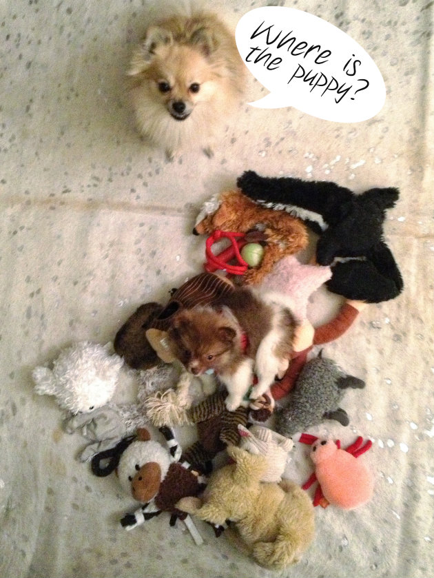 puppy in stuffed animals