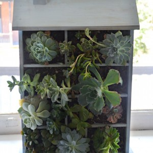 diy-succulent-planter