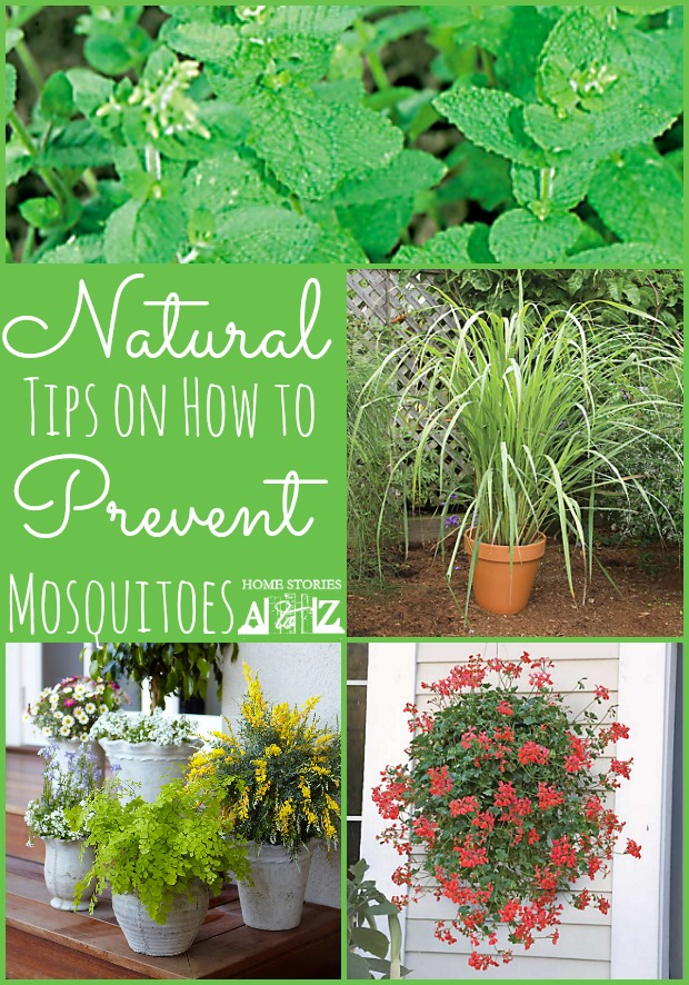 How To Prevent Mosquitoes Home Stories A To Z