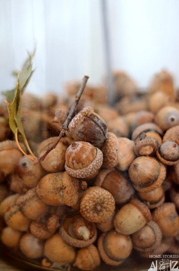 fall acorns