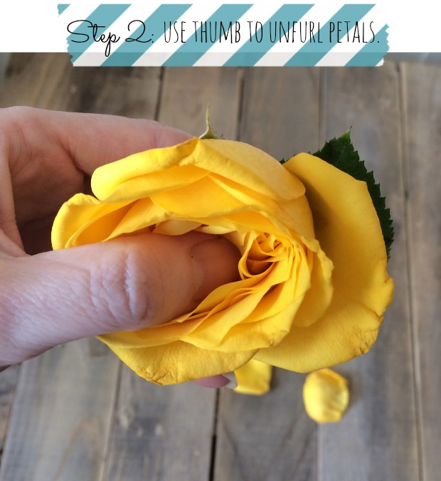 How to get roses to open full