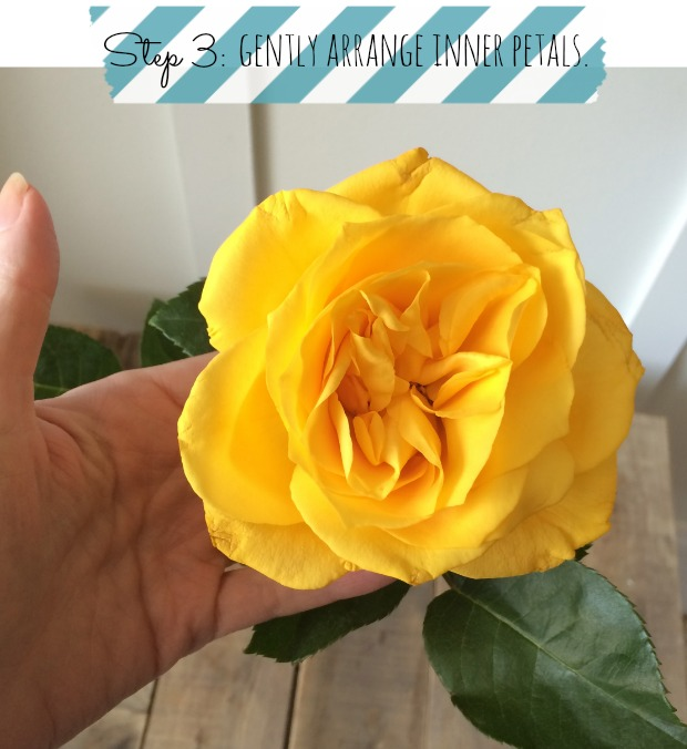 How to make a rose bloom faster