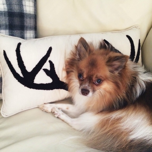 antler pillow