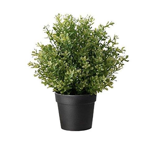 Faux Thyme Plant