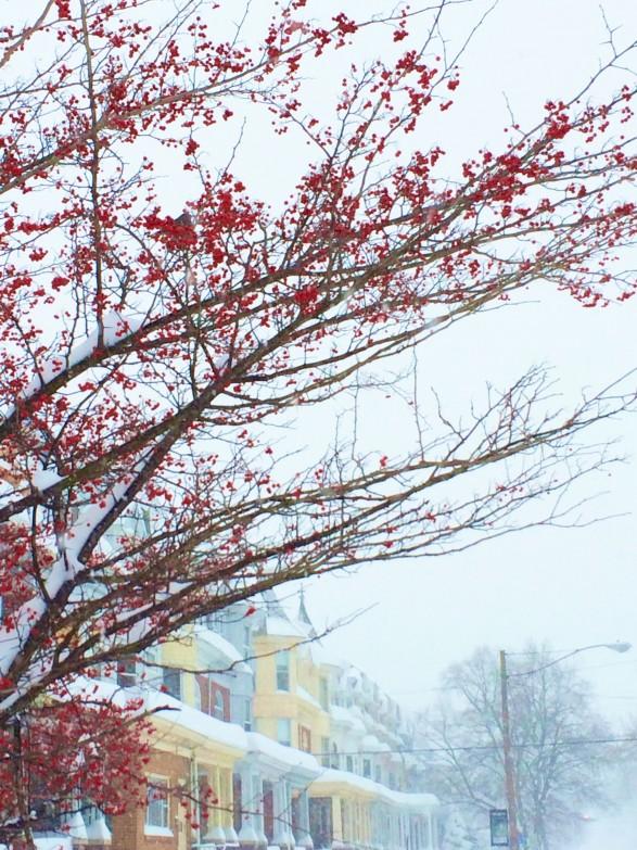 blizzard 2016