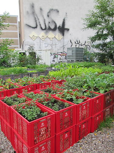 Milk crate raised garden