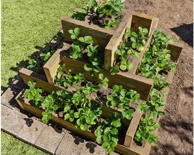 Strawberry garden bed tutorial