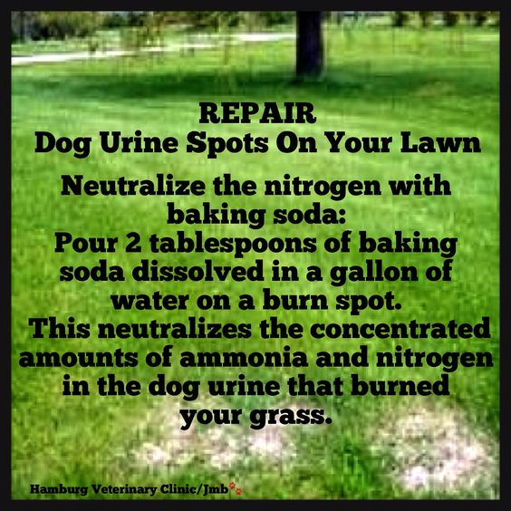 Repair Grass Burns from Dog Urine