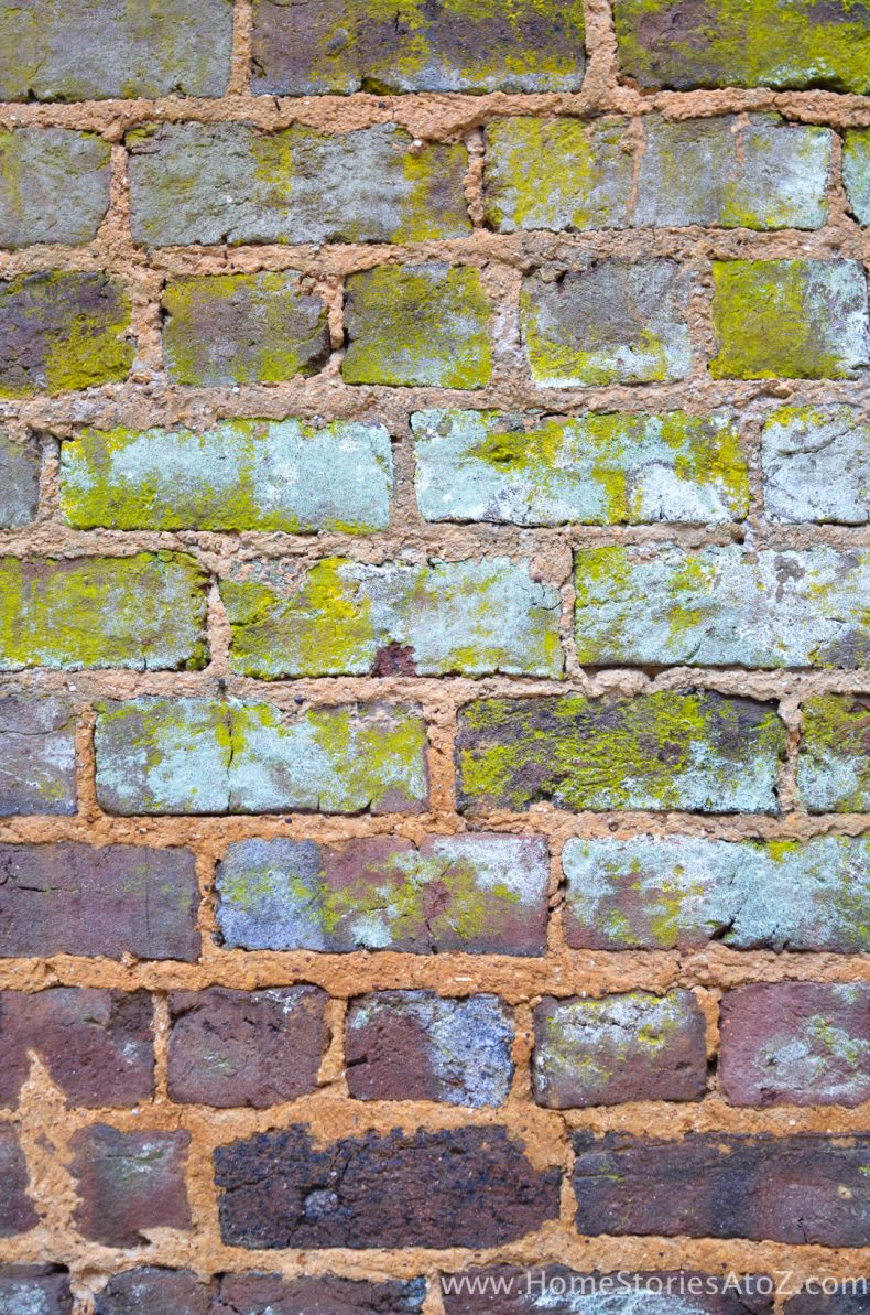 Gorgeous color palette on brick wall