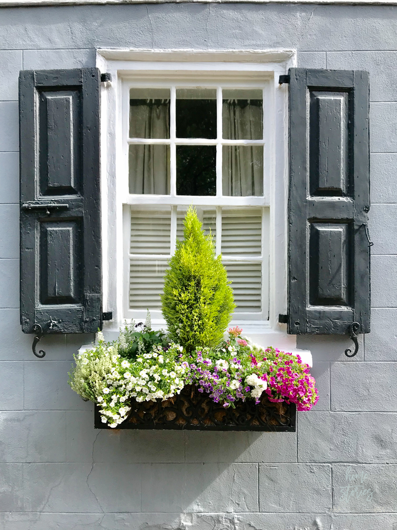 flower box ideas Charleston flower boxes