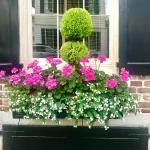 Flower Box Ideas: Window Flower Box Inspiration from Charleston Homes