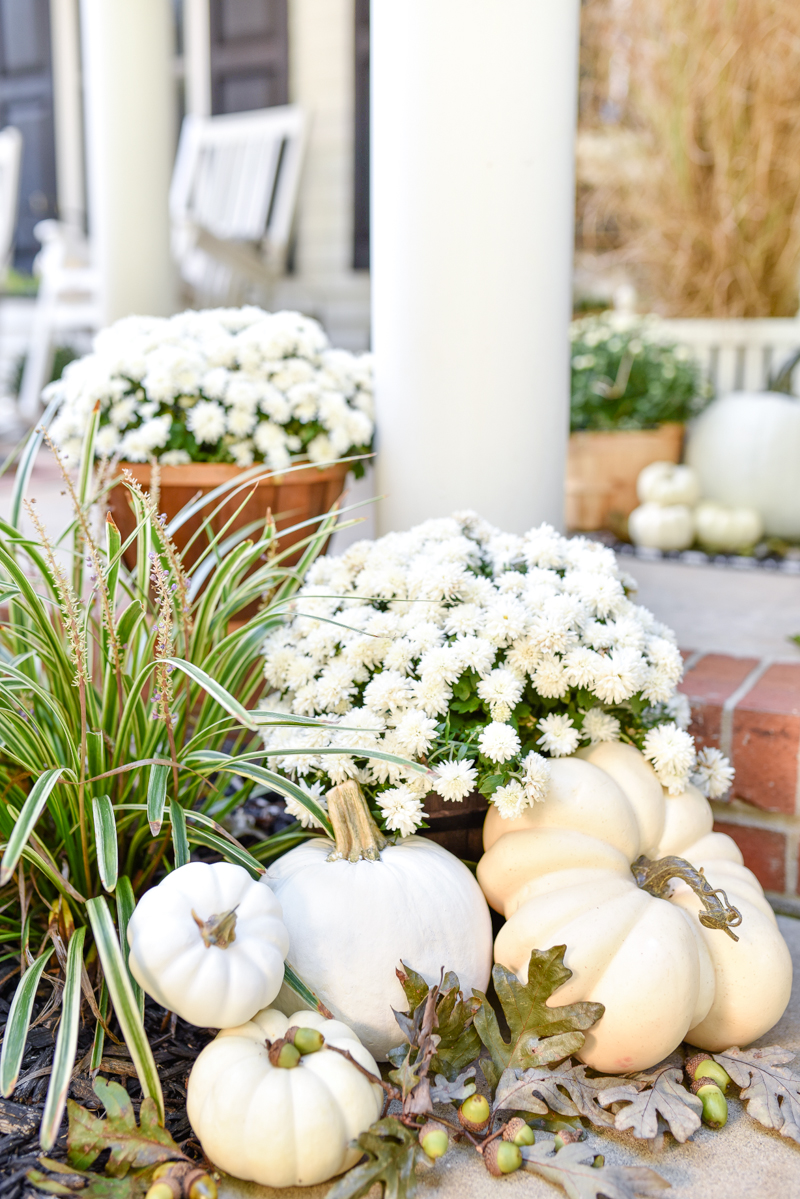 white pumpkins white mums