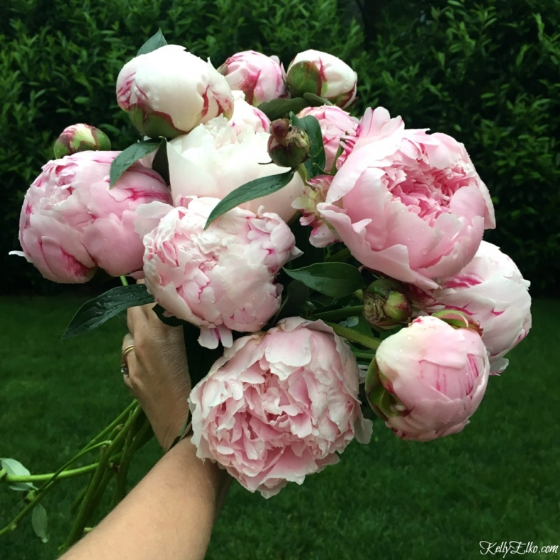 How to Grow the Prettiest Flowers - How to Grow Peonies by Kelly Elko