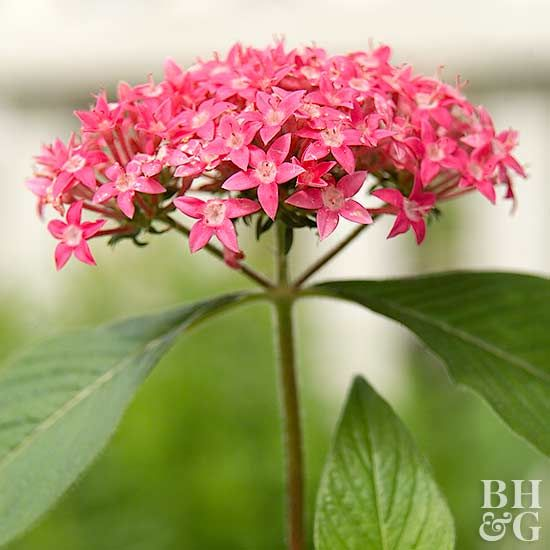 How to Grow the Prettiest Flowers - How to Grow a Butterfly Garden by BHG