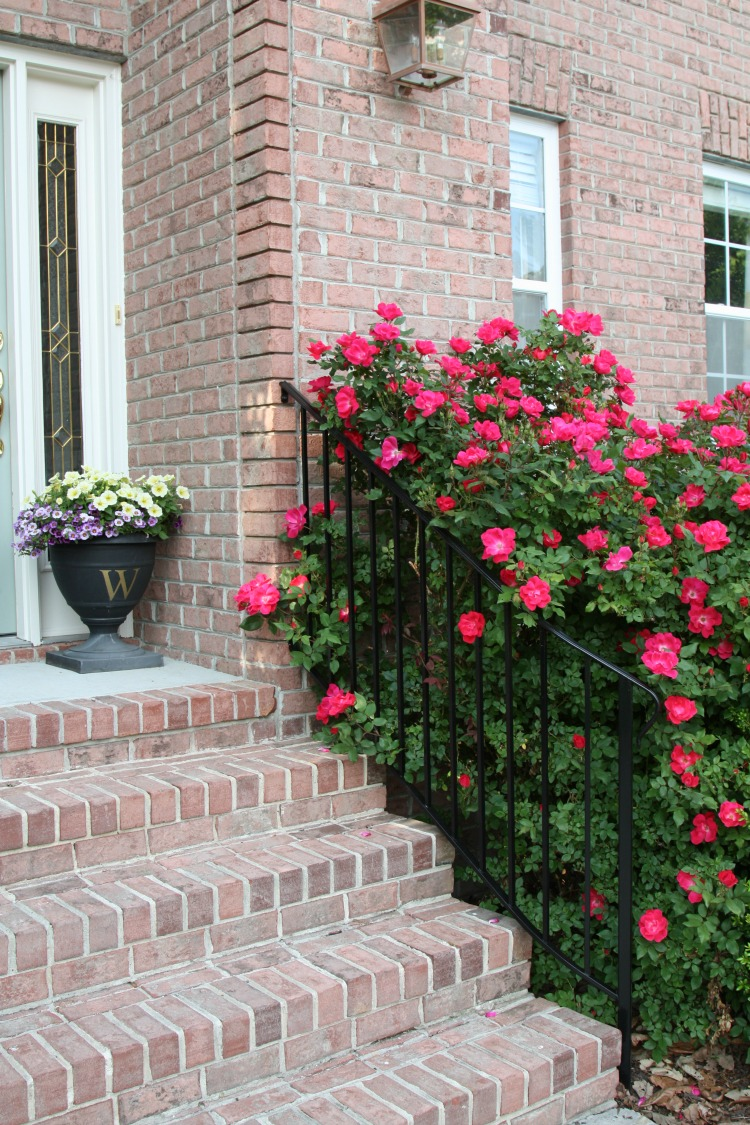 How to Grow the Prettiest Flowers - When to Prune Knockout Roses by Sand & Sisal