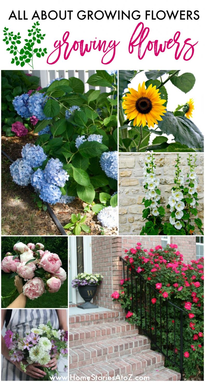 How to Grow the Prettiest Flowers for Your Yard - All About Growing Flowers