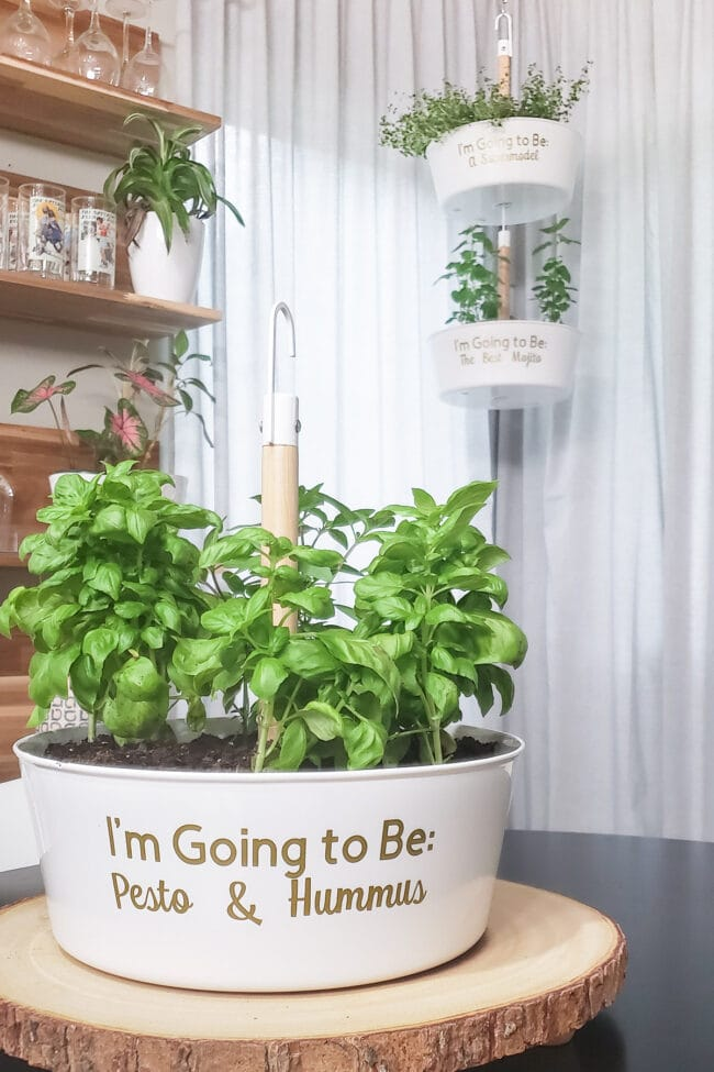 DIY PLanter Ideas - Personalized Herb Planters by Polished Habitat