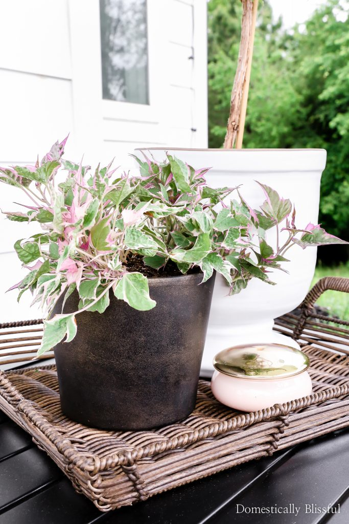 DIY Planter Ideas - DIY Black Aged Terra Cotta Pots by Domestically Blissful