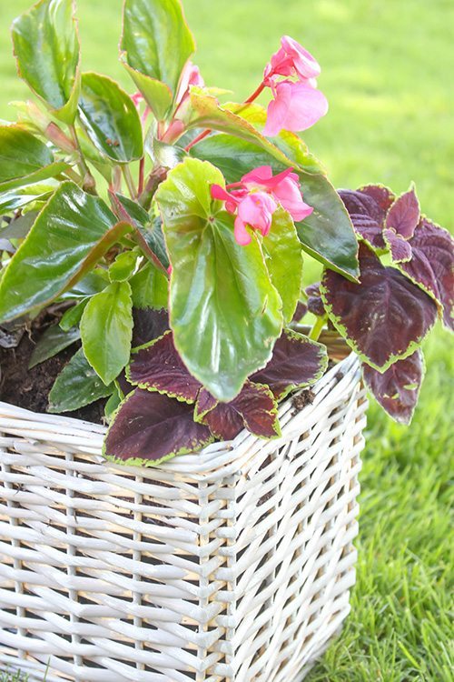 DIY Planter Ideas - How to Use a Basket as a Planter by Creekline House